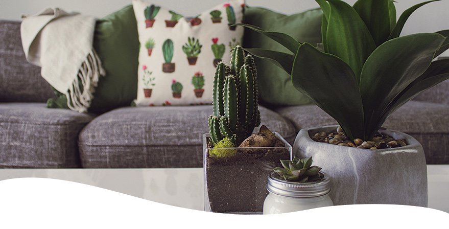 three succulents in containers on coffee table in living room