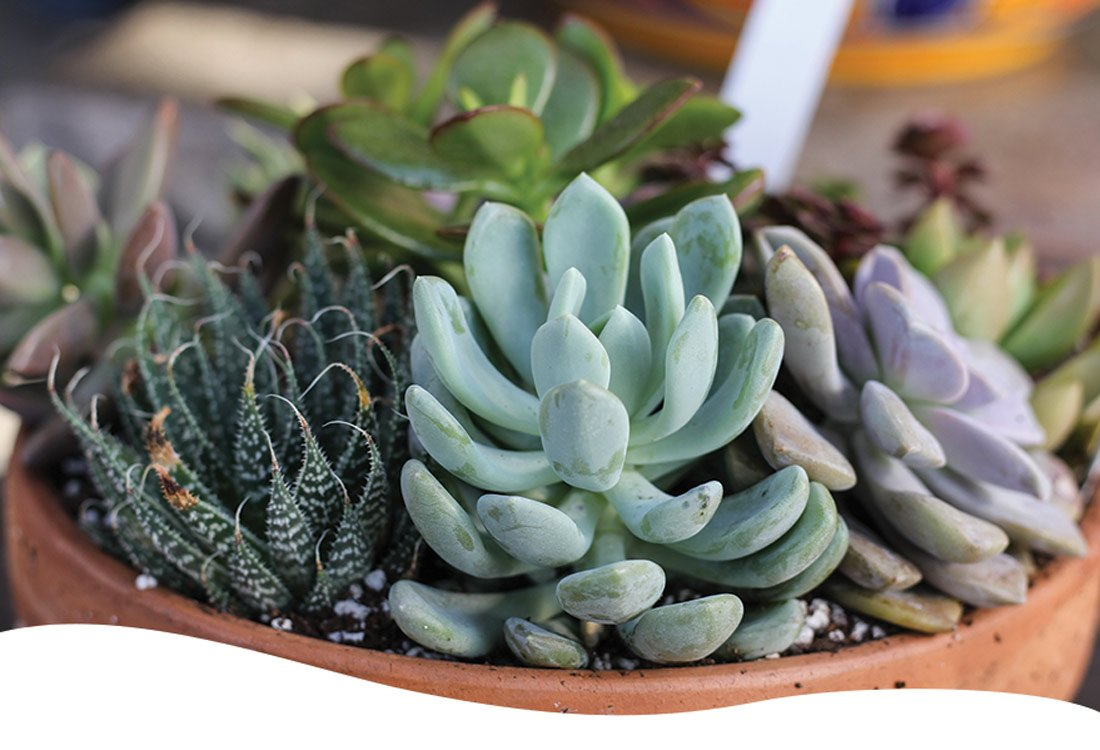 various succulents in a container