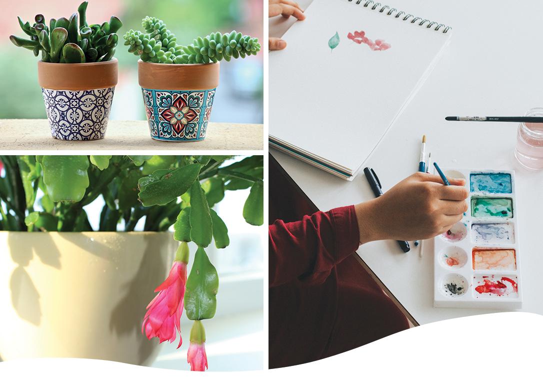 Thanksgiving Cactus Gift Ideas