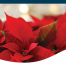 Poinsetta Package