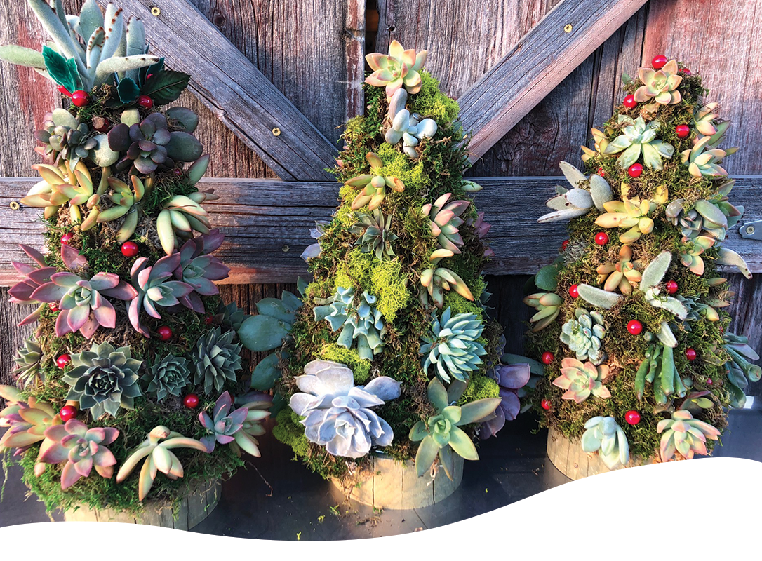 Diy Succulent Wreath Archives Ted Lare Design Build