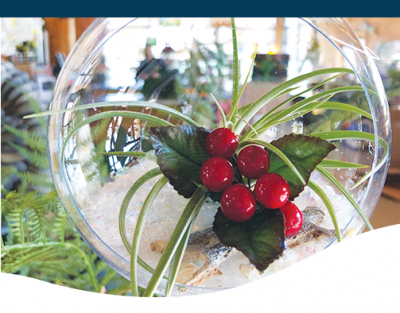 Holiday decorated air plant with christmas berries