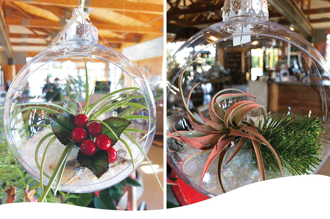 Holiday decorated air plant globes and ornaments