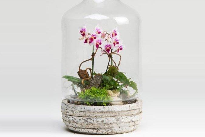Orchid Terrarium Ted Lare Design Build