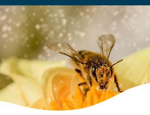 Plants for Pollinators