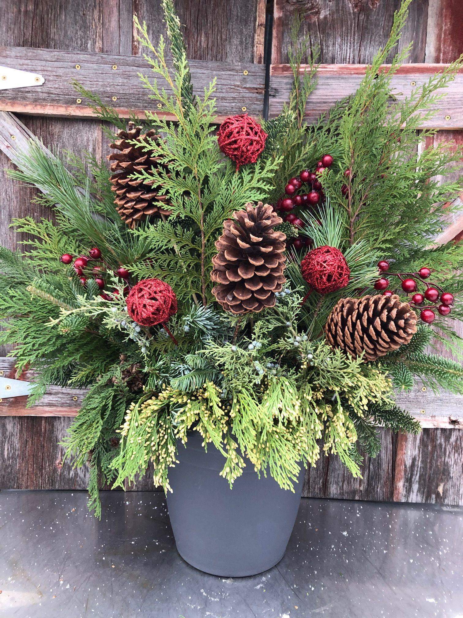 holiday red evergreen pot