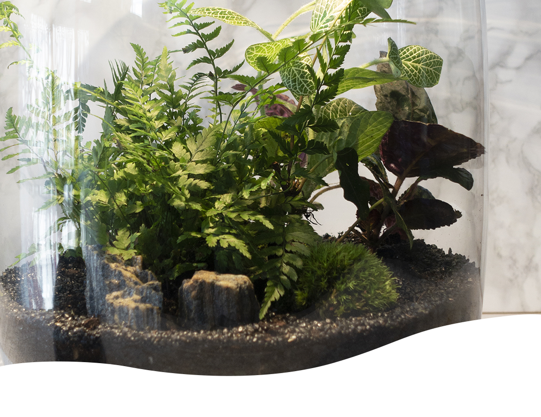 Low Light Closed Terrarium Plants Archives Ted Lare Design Build