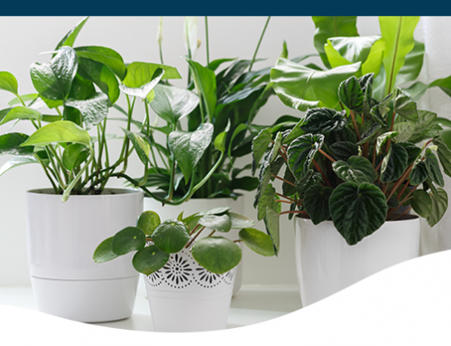 10 Winter Survival Tips for Your Houseplants