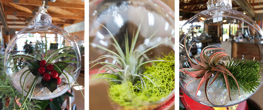 three images of live plants in glass ornament balls