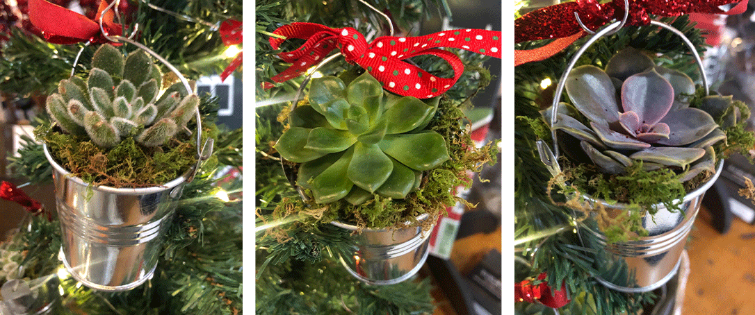 three images of succulents inside small hanging metal bucks on a Christmas tree
